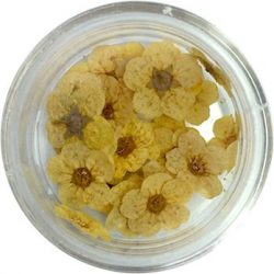 Getrocknete Blumen - Zitronengelb
