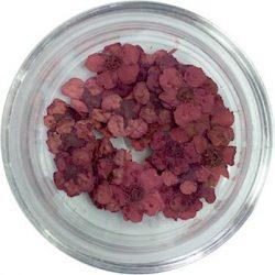 Getrocknete Blumen - Burgund