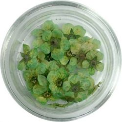 Getrocknete Blumen - Grün